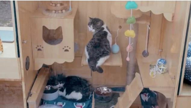 貓奴工程師獻給浪浪的庇護所-AI人工智慧貓窩