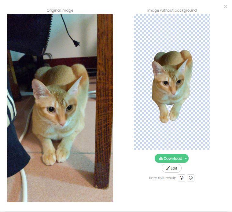AI去背網站remove.bg幫阿比西尼亞貓去背的前後對比圖