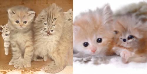NVIDIA的AI創造的貓咪-3 達內教育