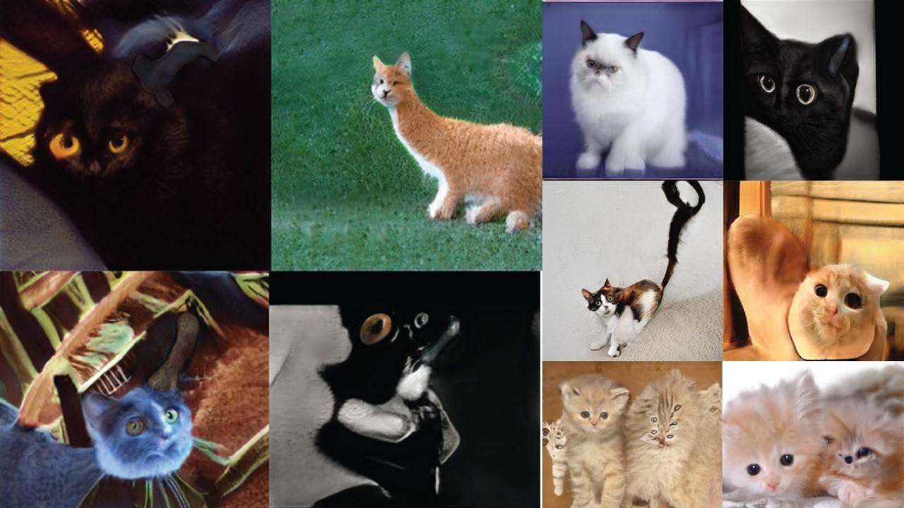 經由StyleGEN生成的虛擬貓