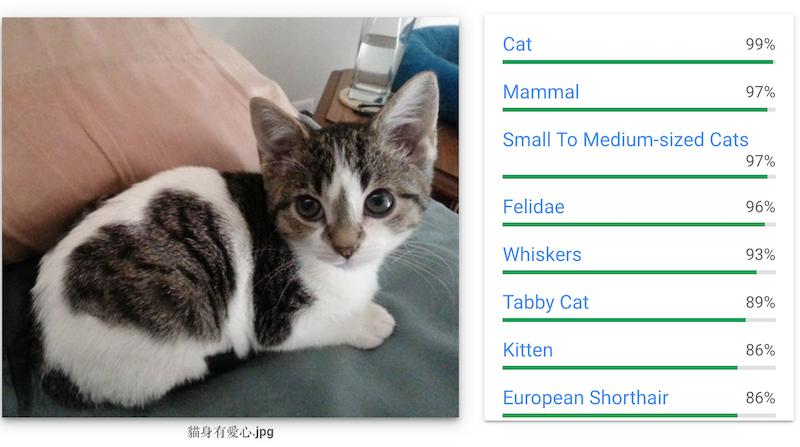 Google的圖片AI辨認這張圖為貓咪圖