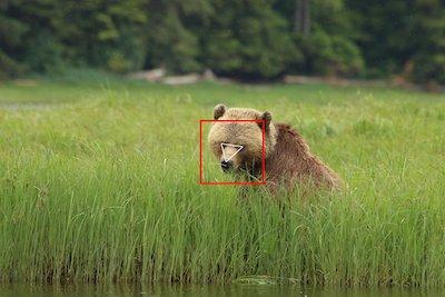 人工智慧熊臉辨識系統「BearID」 AI