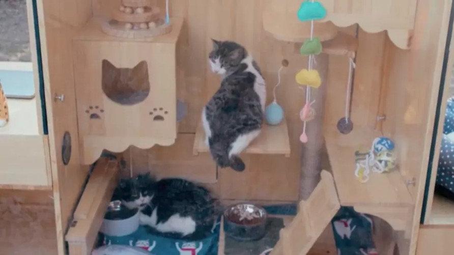 人工智慧浪貓庇護所照片
