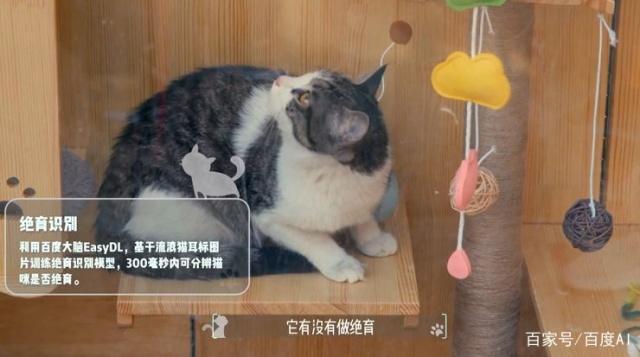 AI結紮貓識別系統實際運作圖