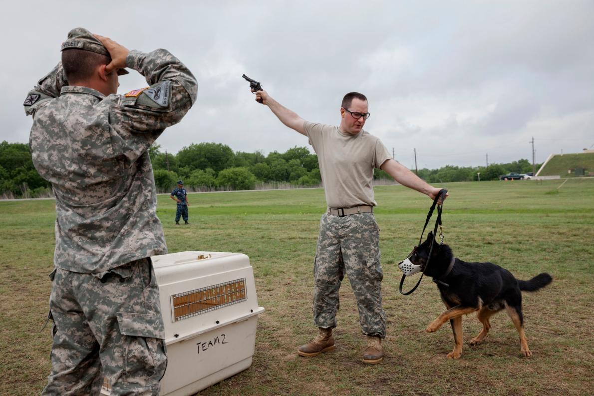 正在適應槍聲的軍犬