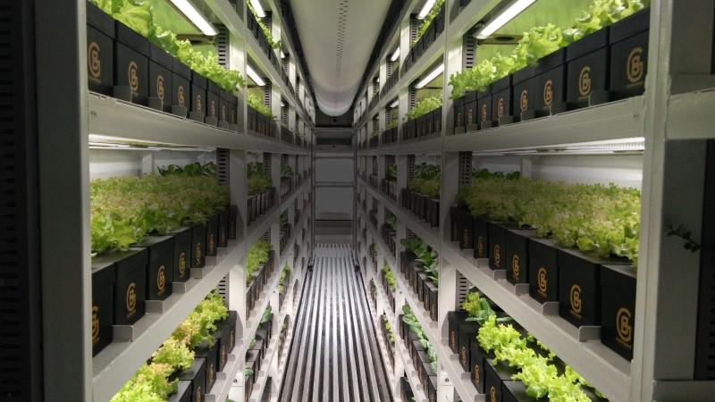 Boom Grows 農場運用人工智慧技術打造完美溫室的