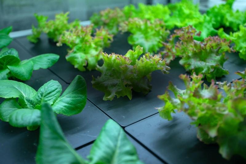 運用人工智慧技術打造農業的 Boom Grows 官網圖片