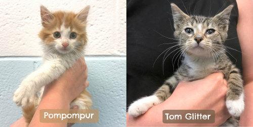 被人工智慧命名為「布丁狗」與「閃亮湯姆」的貓