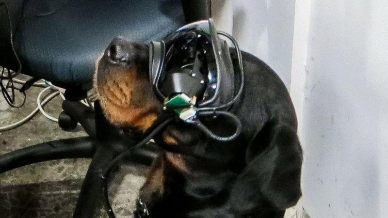 戴著AR擴增實境裝置的軍犬