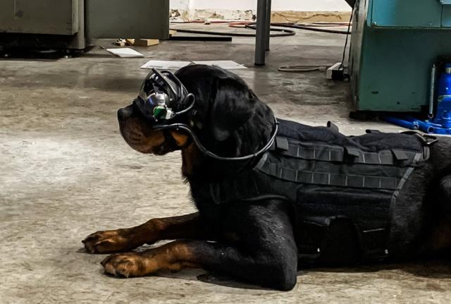 美軍研發狗用 AR 頭戴裝置 跑多遠都能「看」到長官指令