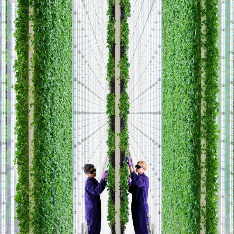 美國農業新創公司 Plenty 開發了高聳的「垂直農場」